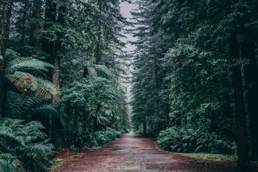 Bosque Japon